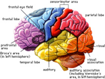 Attention Span is a Cognitive (Brain) Function