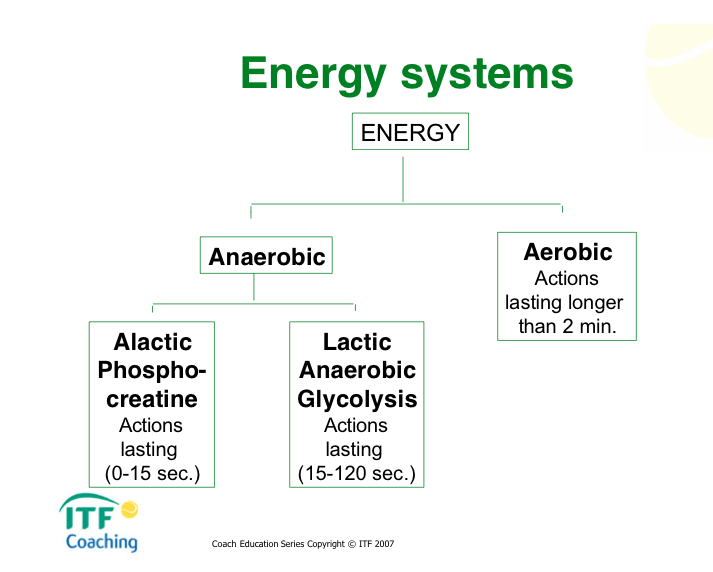 touch football and energy systems Fartlek training can give football players a competitive edge by challenging the  body's energy systems and duplicating the varying intensity of.